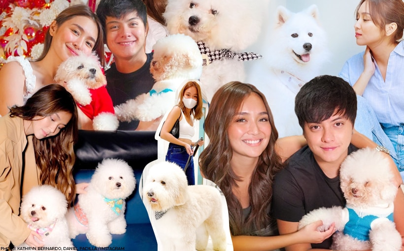 ~*Gifts*~ to get your pet, as seen on Kathryn and Daniel's fur babies